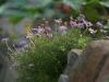 Blumen am Wegesrand (Foto: Wolfgang Keber)